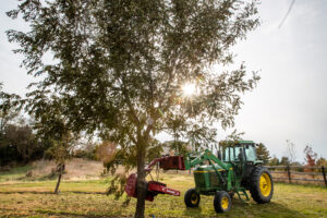 Sarah Ferdico shakes pecans off of trees in the Twin Springs Pecan orchard located in Firth, Nebraska on Monday, Nov. 4, 2019. Twin Springs Pecans also has an orchard in Bennet.
