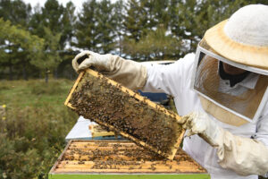 Charles Wilkin checks on a hive Sunday, Oct. 9, 2016, in Narrowsburg, New York. Wilkin started keeping bees seven years ago, and in the last season packaged over 400 pounds of honey to sell to local restaurants and grocery stores.
